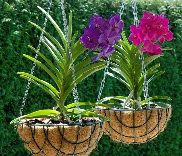 1000 Images About Orchid Pots On Pinterest Ceramics