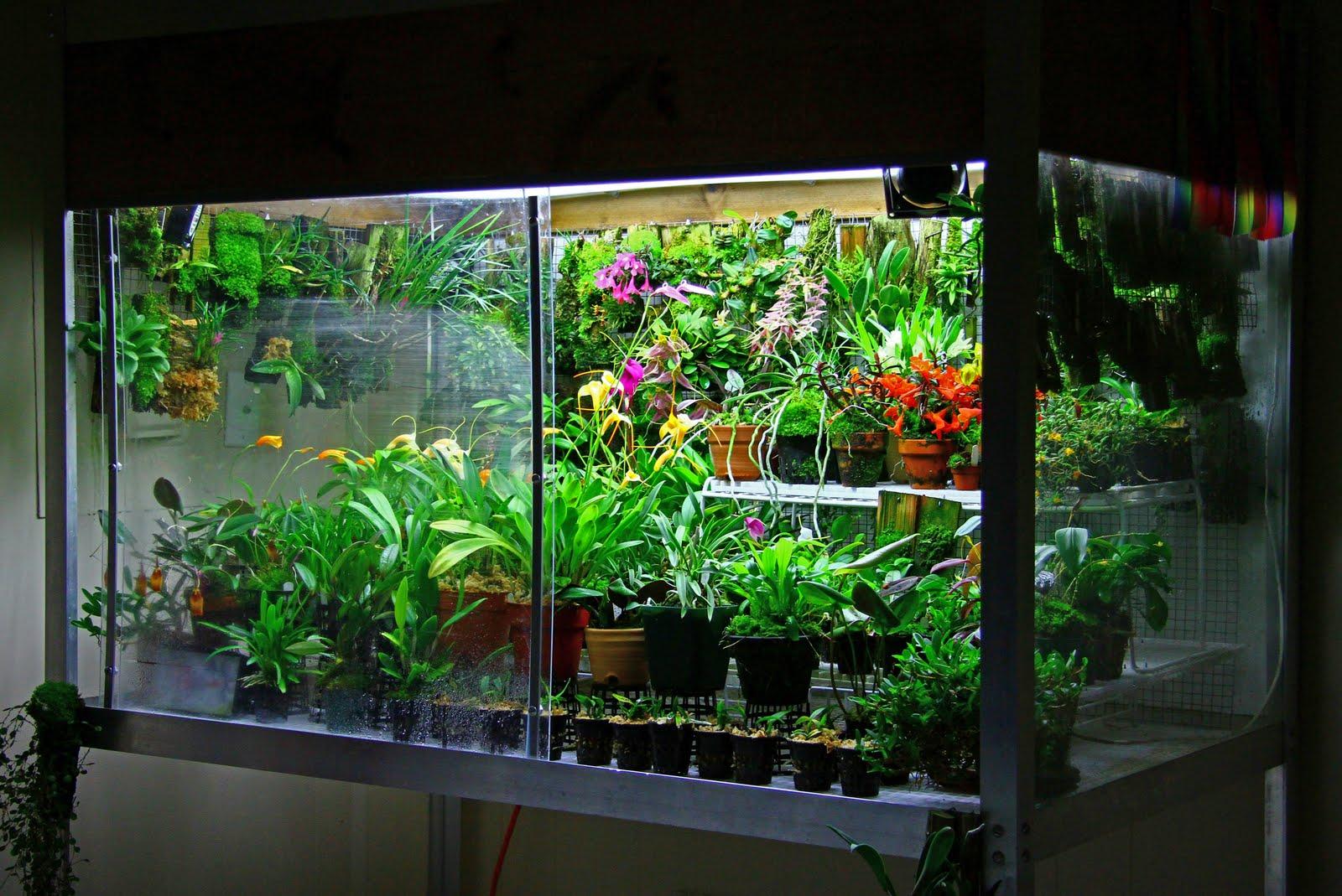 Orchidarium Orchid Care Amp Tips